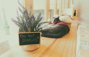 Beneficios que te brinda un hotel para gatos
