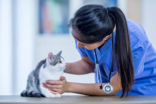 Suministro de medicamentos y cuidado veterinario