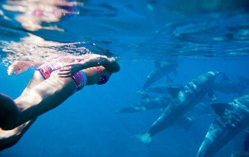 Consejos para el nado con delfines en Xcaret