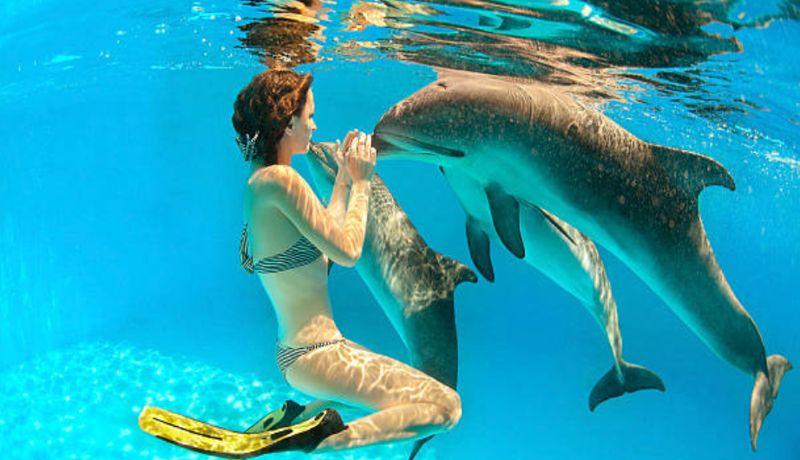 Nado con delfines en Xcaret