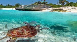 tortugas en Akumal