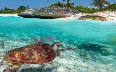 Akumal: Tortugas, Aguas Cristalinas y Arenas Blancas