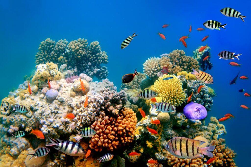 arrecifes en akumal